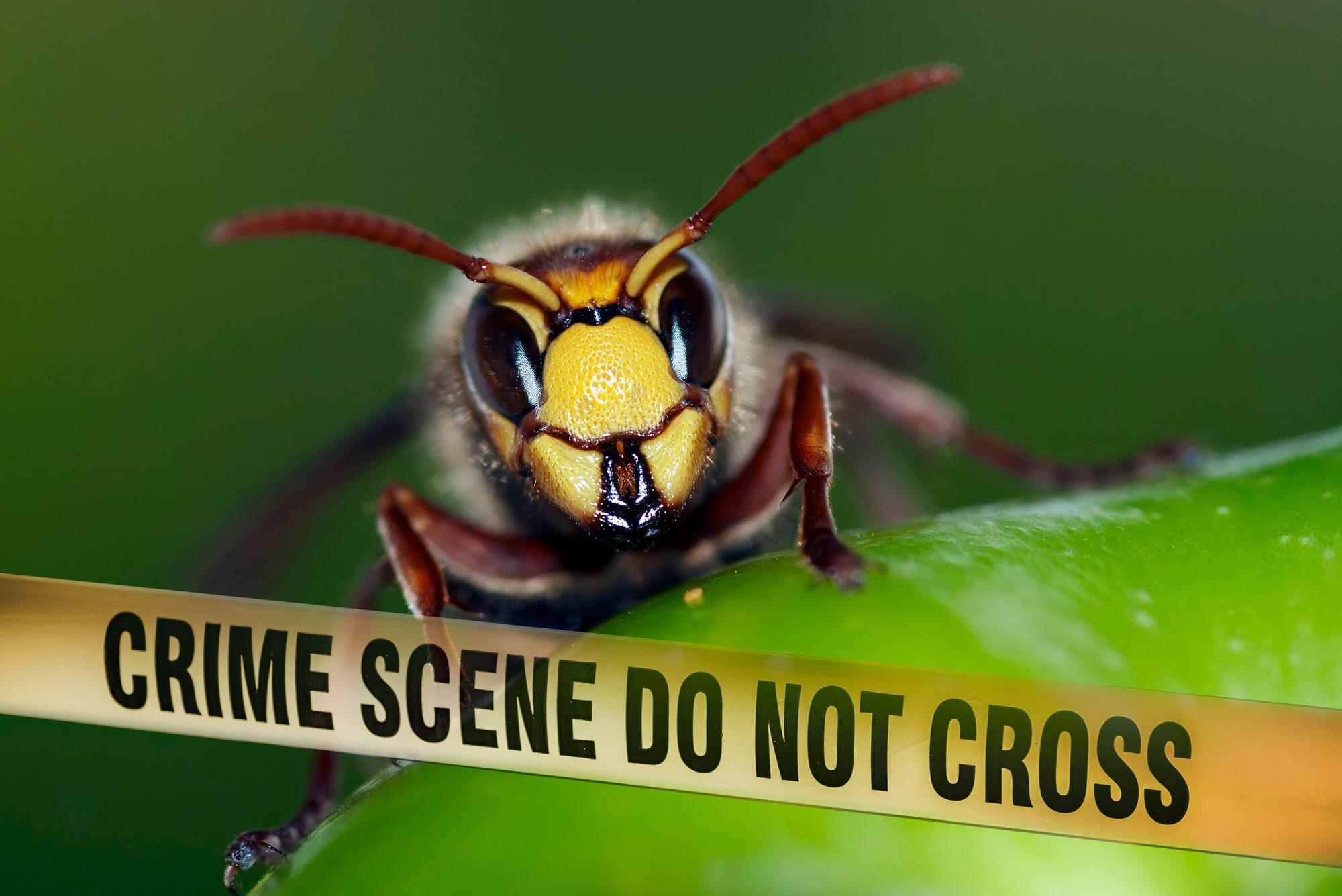 Episode 2: Murder Hornets!