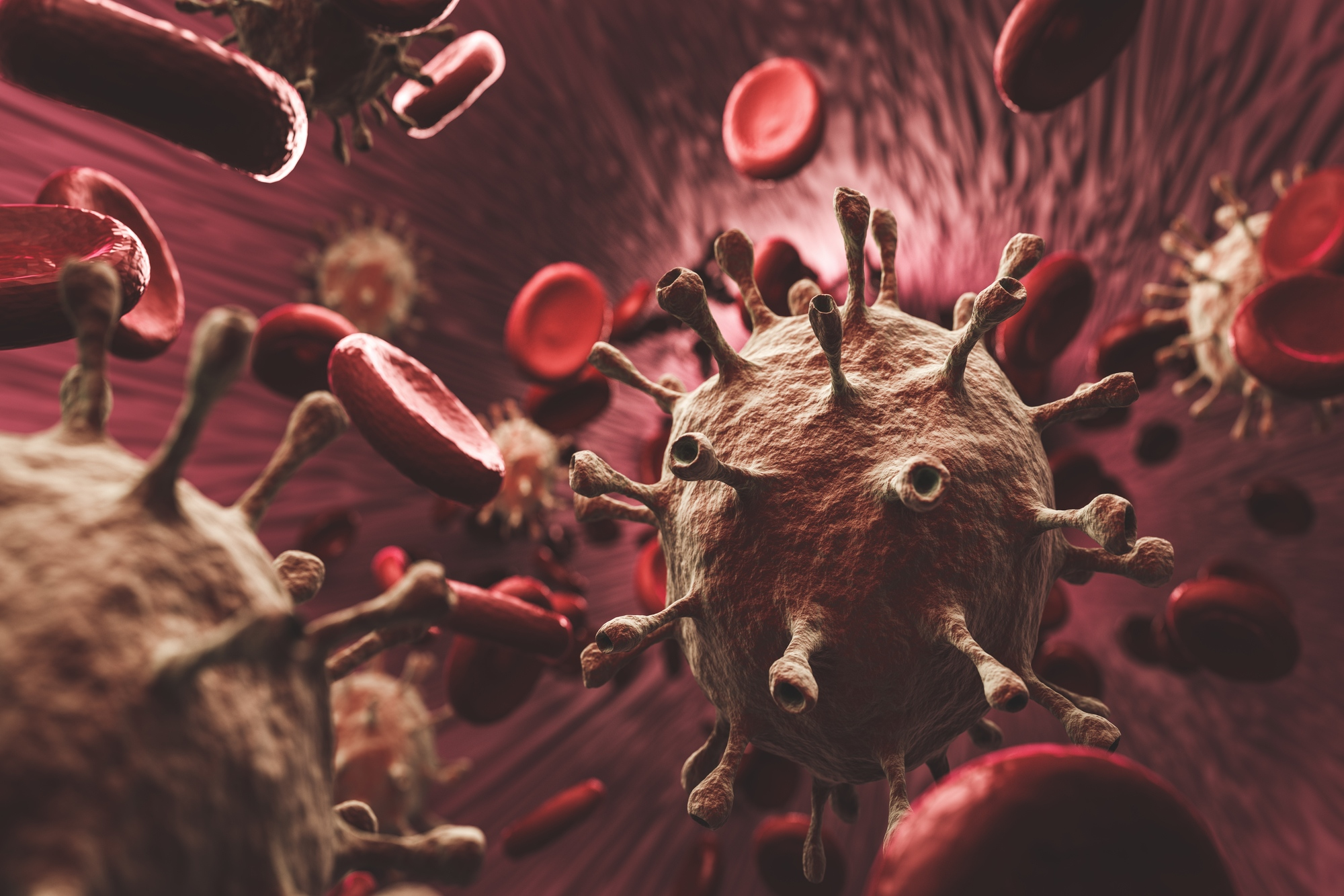 Red blood cells and coronavirus in an organism