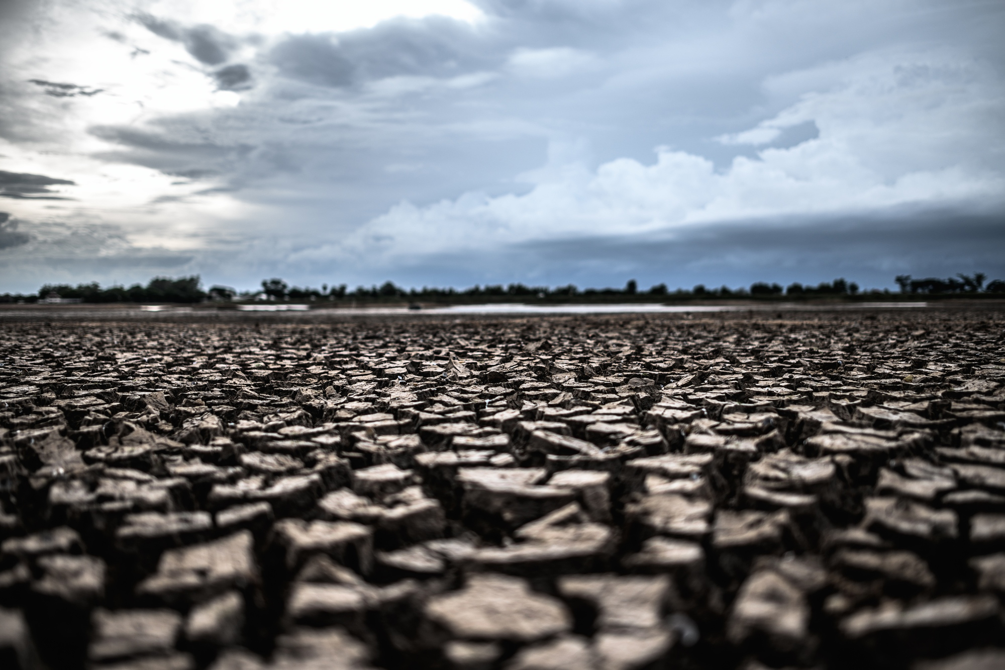 Arid land with dry and cracked ground